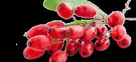 goji vita fruta