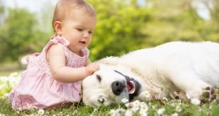 cachorro com crianca