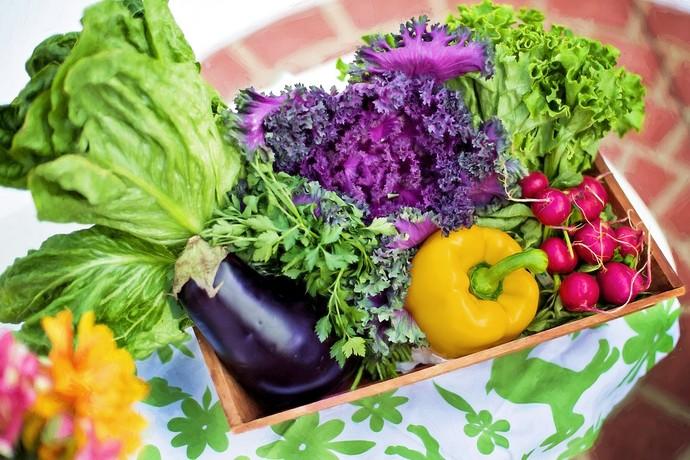 Dieta dos alimentos vivos: tudo sobre ela! (Foto: Divulgação)